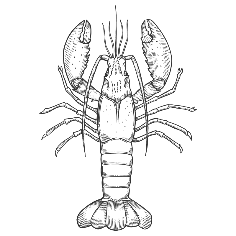 Our Products: Drawing of a Lobster